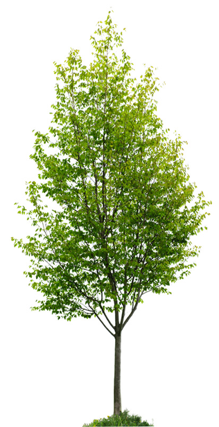 ourServiceTree